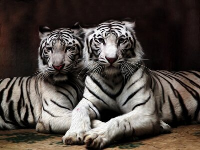 Fototapeta Obraz olejny White Tiger / fot malowanie efekt Oil