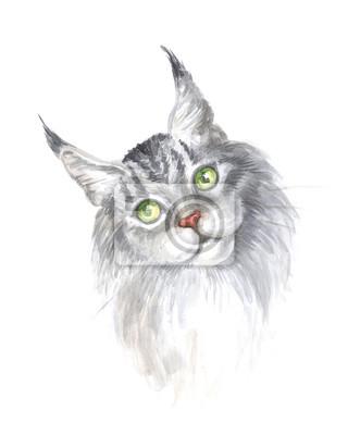 Obraz Rasowy Srebrny Pręgowany Maine Coon Kot Akwarela Fototapeta