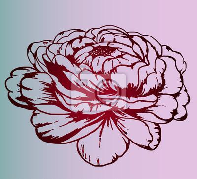 Fototapeta Odcienie Szarości Szkic Tatuaż Pionowej Róża Botanika Szczegółowy