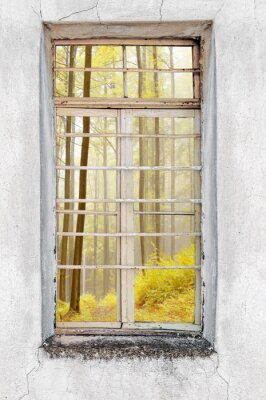 Fototapeta Okna starego domu cementu z widokiem na las