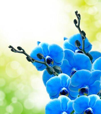 Fototapeta Orchid kwiat z bliska