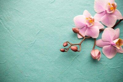 Fototapeta Orchidea.