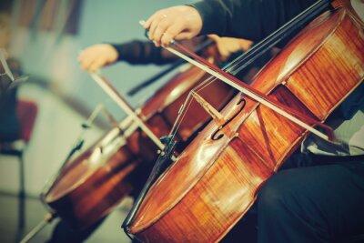 Fototapeta Orkiestra symfoniczna na scenie, grając na wiolonczeli rąk