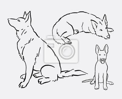 Fototapeta Owczarek Niemiecki Pies Pokojowy Zwierząt Rysunku Dobre Wykorzystanie