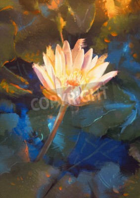 Fototapeta painting of beatiful yellow lotus blossom,single waterlily flower blooming on pond
