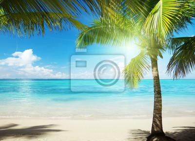 Fototapeta Palm i plaży