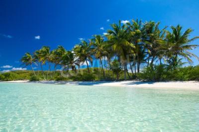 Fototapeta Palm i tropikalna plaża