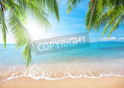 Fototapeta Palm i tropikalnej pla? Y