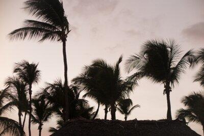 Fototapeta Palma sylweta w pięknym czasie zachodu słońca