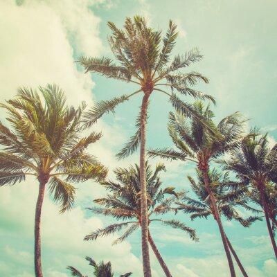 Fototapeta palmy kokosowe i niebieskie niebo chmury z rocznika tonem.