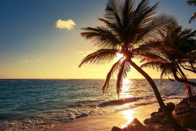 Fototapeta Palmy na tropikalnej plaży
