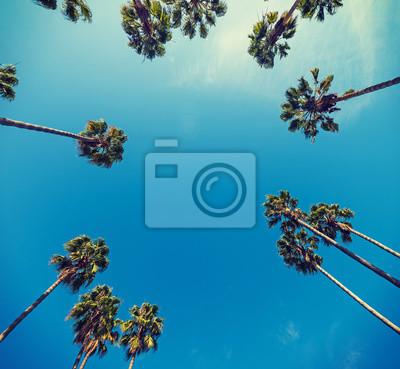 Fototapeta palmy widziane z dołu