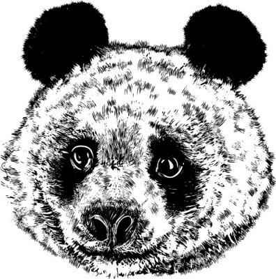 Fototapeta Panda 01