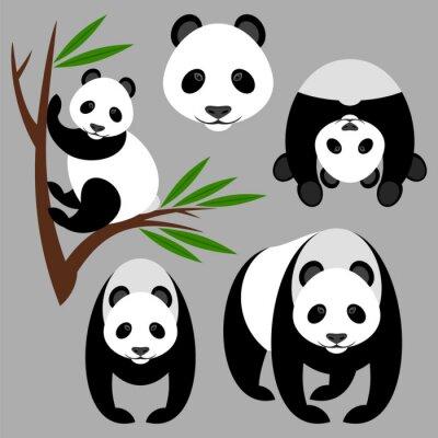 Fototapeta Panda