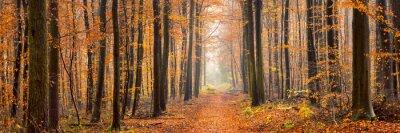 Fototapeta panorama lesie jesienią