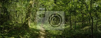 Fototapeta Panorama Trampelpfad im dichten Wald