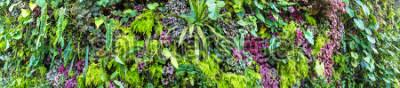 Fototapeta Panorama Vertical ogród z tropikalnym zielonym liściem i kwiatami. Tło natura