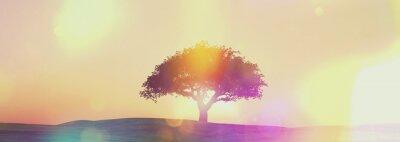 Fototapeta Panoramiczny drzewa słońca krajobraz z retro efekt