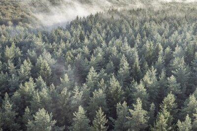 Fototapeta Panoramiczny widok z mglistym lesie w stylu retro, vintage.