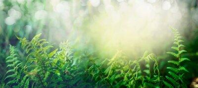 Fototapeta Paproć w lasów tropikalnych dżungli ze światłem słonecznym, na zewnątrz przyroda tło, transparent