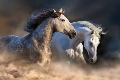Fototapeta Para z koniem uruchomiony w pył w świetle słońca