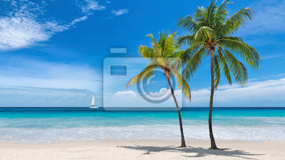 Fototapeta Paradise beach with palm trees and sailboat in tropical sea in Key West, Florida