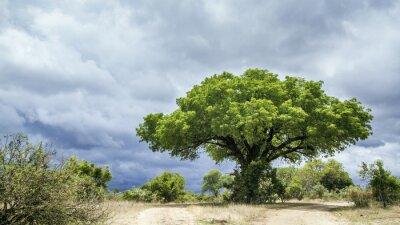 Fototapeta Park Narodowy Krugera krajobrazu, Republika Południowej Afryki
