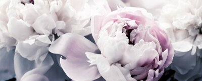 Fototapeta Pastel peony flowers as floral art background, botanical flatlay and luxury branding design