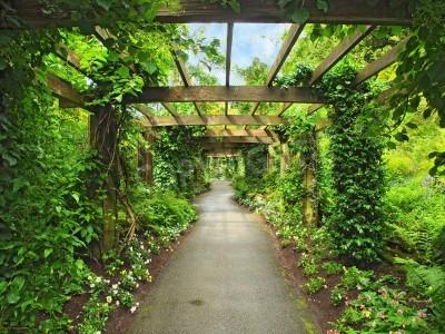 Fototapeta Pergola przejście w ogrodzie, otoczony wisteria i pnącza