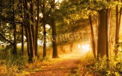 Fototapeta Piękna jesień sceny zaprasza na spacer w mglisty chodnik w lesie z wiązki światła słonecznego