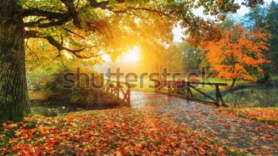 Fototapeta Piękna jesienna sceneria w parku. Fotografia plenerowa w świetle wschodu słońca