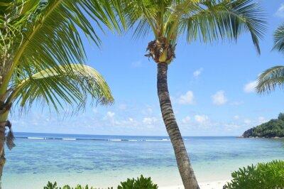 Fototapeta Piękna plaża