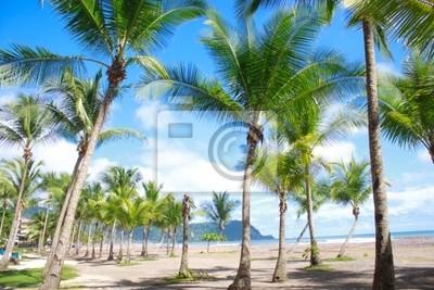 Fototapeta Piękna tropikalna plaża z palmtrees w Jaco, Kostaryka