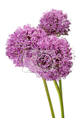 Fototapeta piękne kwiaty