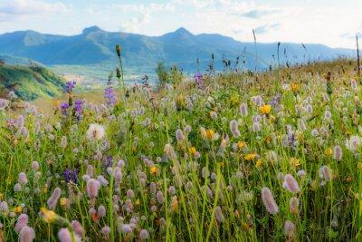 Fototapeta Piękne kwiaty w zielonej trawie. Kwiaty pól. Pod koniec lipca Mt St Helens.