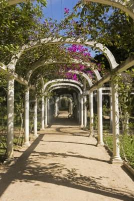 Fototapeta Piękne Łukowe Pergola Nieskończony Ścieżka w Ogrodzie Botanicznym, Rio de Janeiro, Brazylia