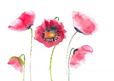 Fototapeta Piękne maku czerwone kwiaty, akwarela