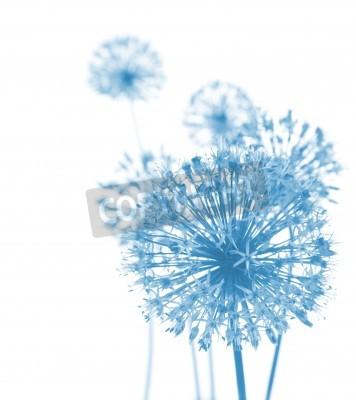 Fototapeta Piękne niebieskie kwiaty / abstrakcyjne skład na białym tle