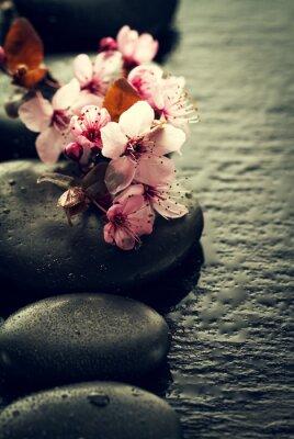 Fototapeta Piękne różowe kwiaty Spa na Spa Gorące kamienie na wodzie Mokre tło. Kompozycja boczna. Skopiuj miejsce. Koncepcja Spa. Ciemne Tło.