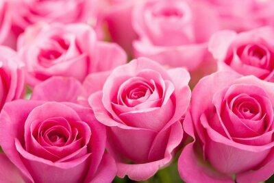 Fototapeta piękne różowe kwiaty w tle