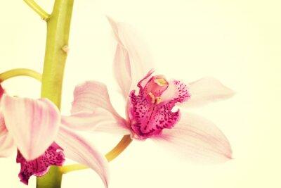 Fototapeta Piękne różowe świeże lilii.