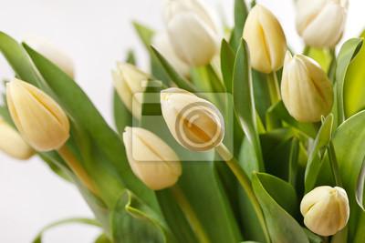 Fototapeta piękne tulipany