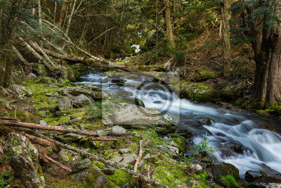 Fototapeta Piękne wodospad w lesie bukowym