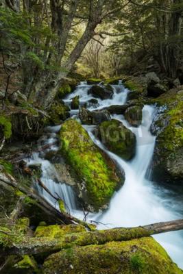 Fototapeta Piękne wodospad w lesie bukowym w Nowej Zelandii