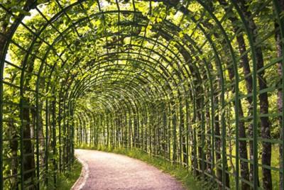Fototapeta Piękne zielone Arcade w parku z ścieżką.