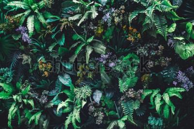 Fototapeta Piękny charakter tło pionowe ogród z tropikalny zielony liść