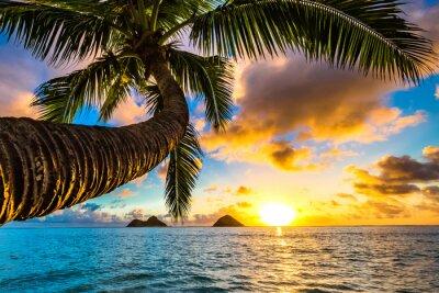 Fototapeta Piękny Hawaiian Sunrise at Lanikai Beach
