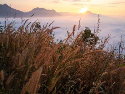 Fototapeta Piękny krajobraz dużo mgły Phu Thok