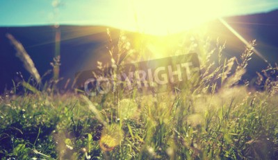 Fototapeta Piękny krajobraz przyrody - Alpine łąka
