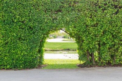 Fototapeta Piękny ogród